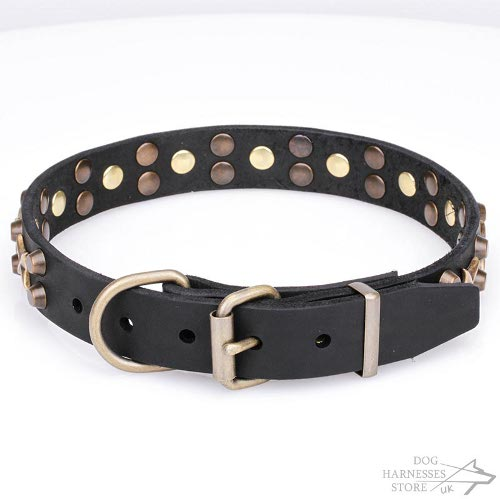 Dog Collar with Stars UK