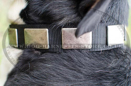 Dog Collars for Swiss Mountain Dog
