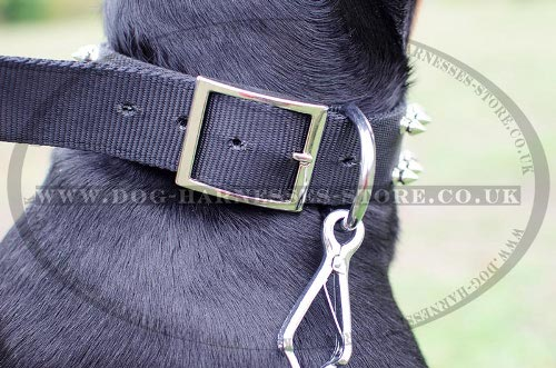 Dog Collars for Dobermans UK