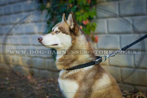 Dog Collars for Husky