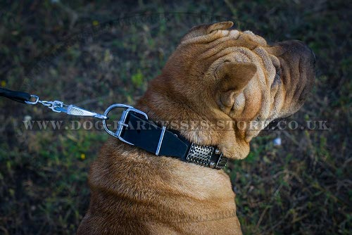 Dog Collars for Shar-Pei