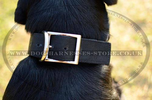 Cheap Dog Collars