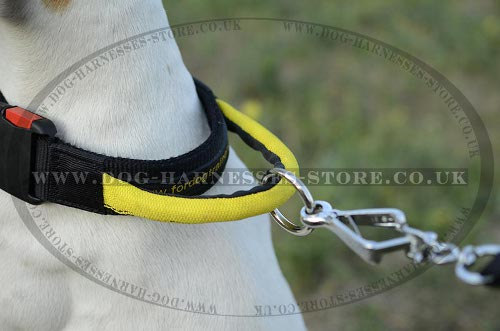 Nylon Dog Collar for English Pointer