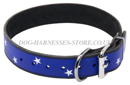 Exclusive Dog Collars UK