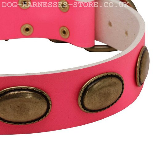 Female Dog Collars Leather