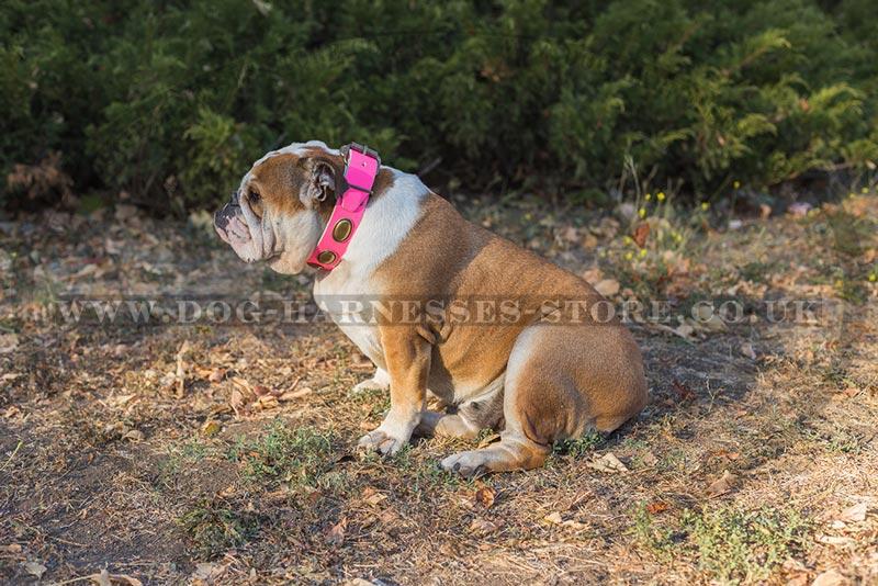 Pink Leather Dog Collar for British Bulldog ⚛ - £47.50