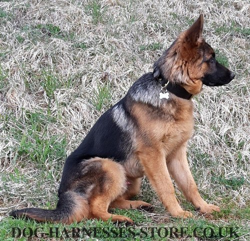 German Shepherd Collars for Sale