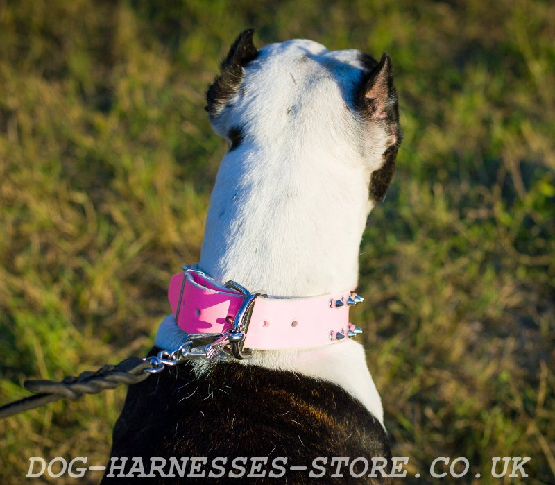 pink girly dog collar for pitbull 35 00