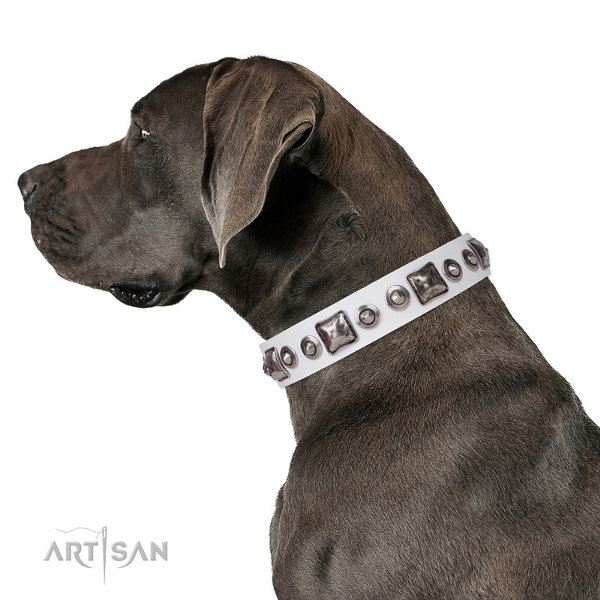Great Dane Collars UK