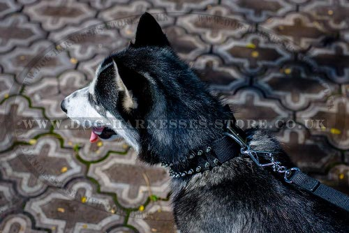 Husky Dog Collars UK