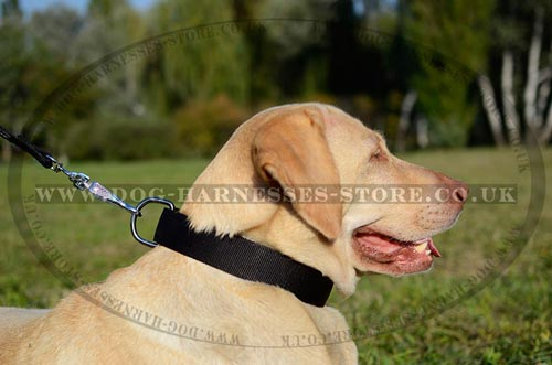 Top Dog Collars ad Accessories