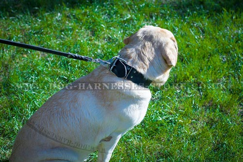 Best Dog Collar Brands