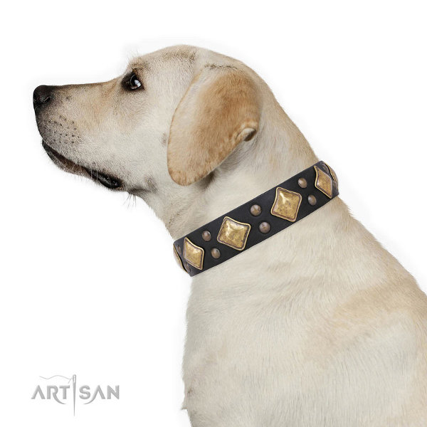Labrador Collars UK