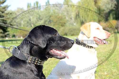 Labrador Dog Collars UK