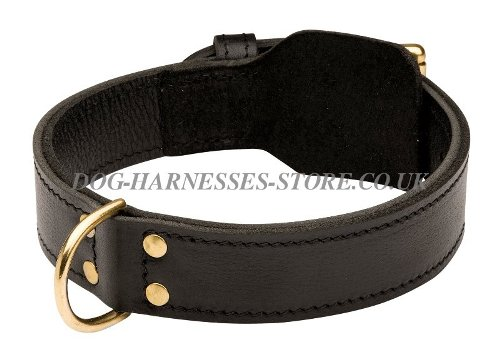 Dog Training Collar UK