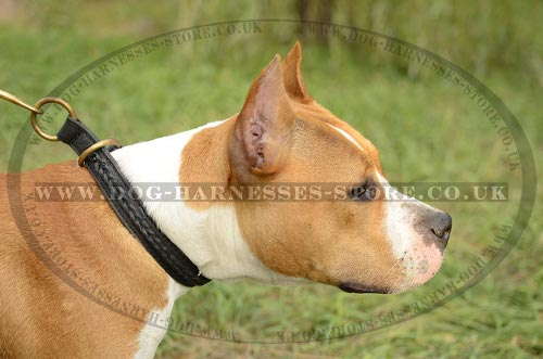 Leather Slip Collar for Amstaff