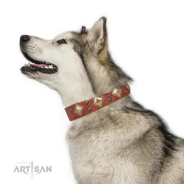 Malamute Dog Collar