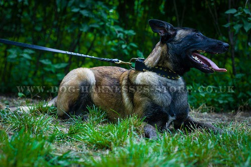 Belgian Malinois UK