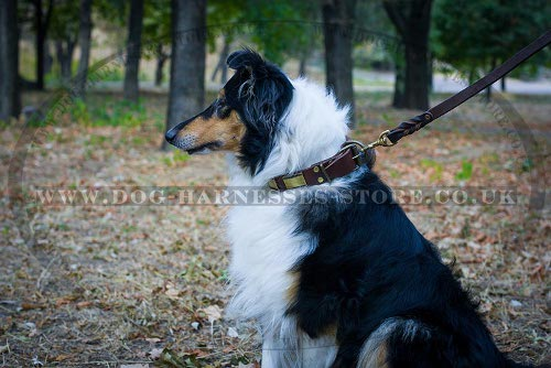 Collie Dog Collar