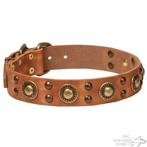 Modern Dog Collars UK