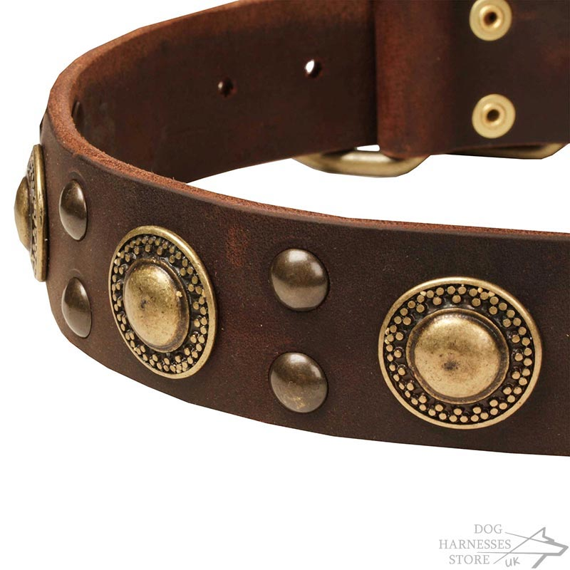 Modern Leather Dog Collar