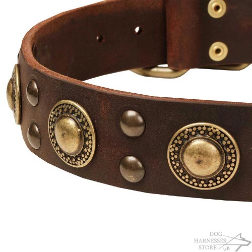 Modern Leather Dog Collars