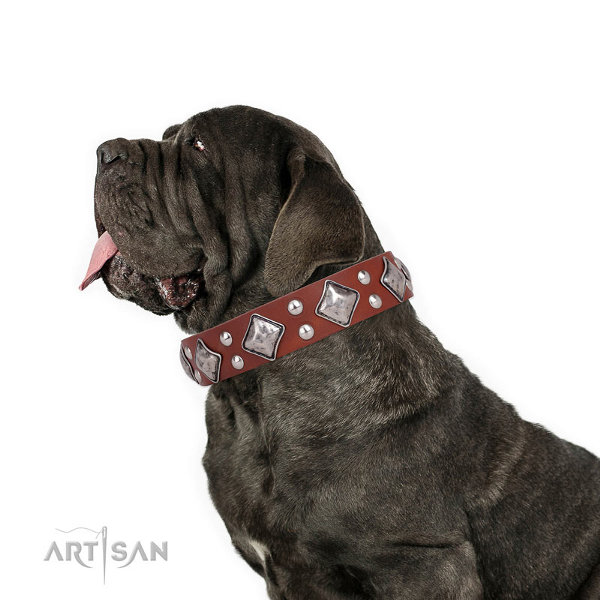 Neapolitan Mastiff Collars for Sale