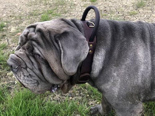 Neapolitan Mastiff Dog Collars