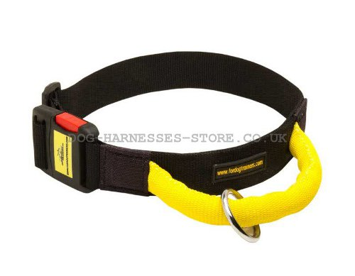 Dog Collar with Handle UK