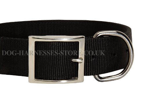 Nylon Dog Collar with Buckle UK