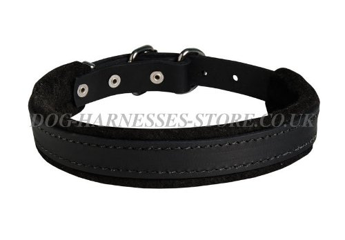 Best Doberman Dog Collar