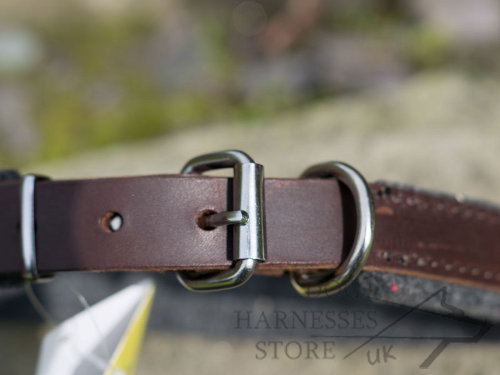 Padded Leather Dog Collars UK