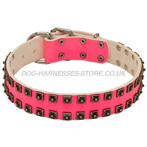 Collar for Shar-Pei Dog