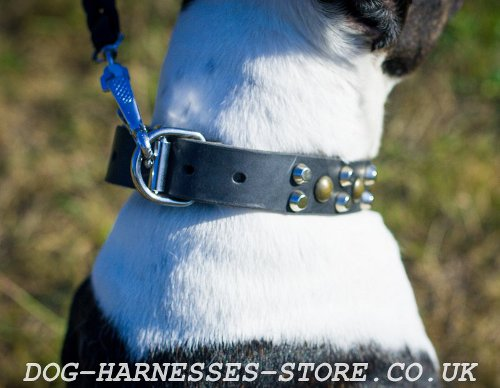 Pitbull Dog Collars UK