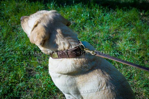 Pretty Dog Collars for Large Dogs