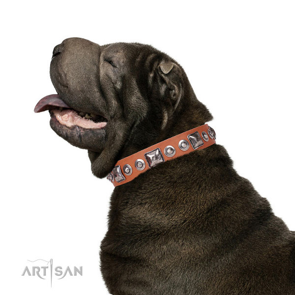 Shar Pei Collars UK