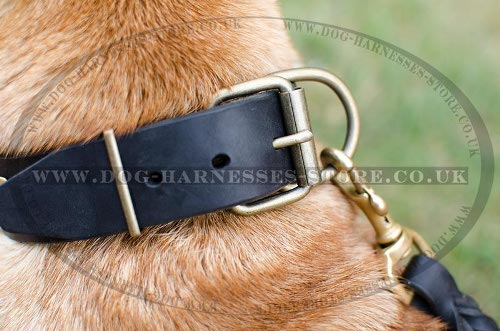 Shar-Pei Collars UK