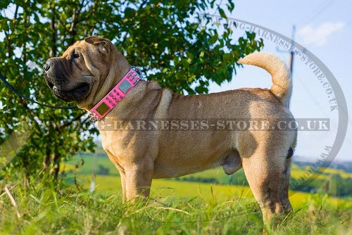 Shar-Pei Dog Collar