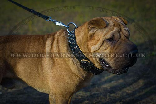 Shar-Pei Dog Collars