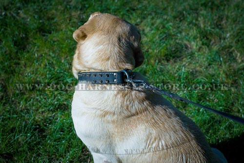 Soft Collar for Dogs