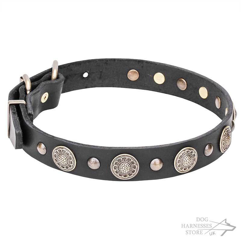 Brass Decorative Studs Dog Collar