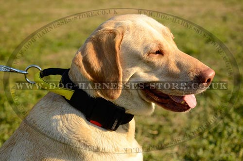 Dog Training Collar with Handle