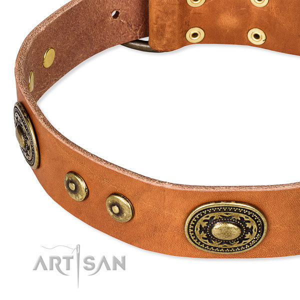 Tan Leather Dog Collars UK