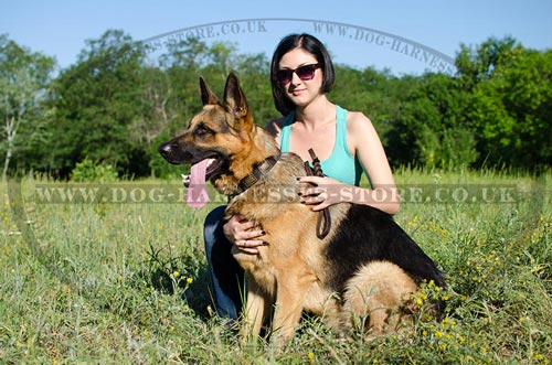 Buy German Shepherd Collars