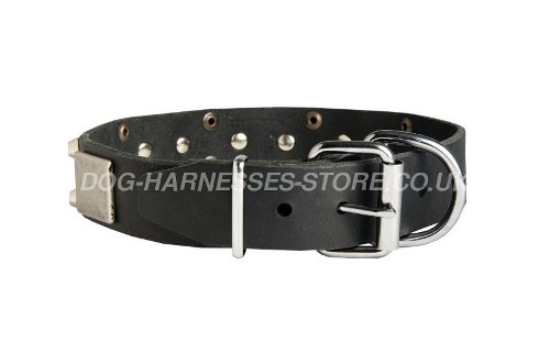 Dog Collars for Dobermans