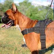 Dog Harness UK Nylon for German Boxer, Worldwide Shipping!