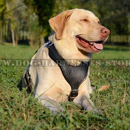 Dog Harness for Labrador with Y-shaped Padded Chest Plate