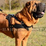 Dog Harness for Shar-Pei Tracking, Pulling and Physical Training