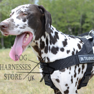 K9 Harness for Dalmatian, Lightweight Nylon with Patches