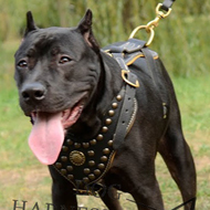 Leather Dog Harness UK for Pitbull, Luxury Studs, Padding